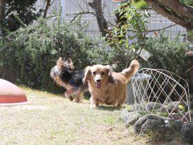 庭で遊ぶ犬達